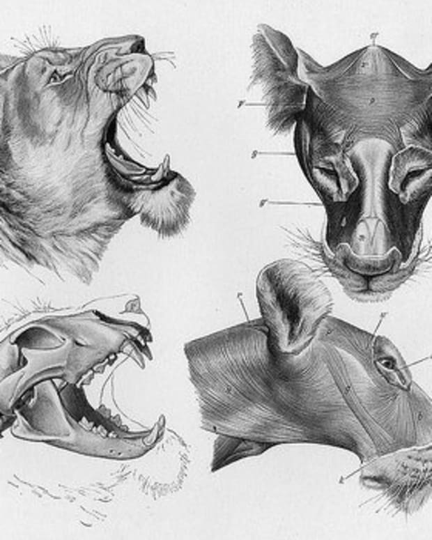 animal-anatomy