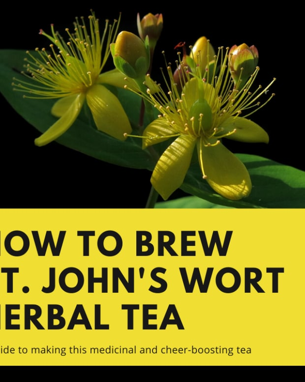 brewing-herbal-tea-how-to-prepare-and-brew-st-johns-wort-tea