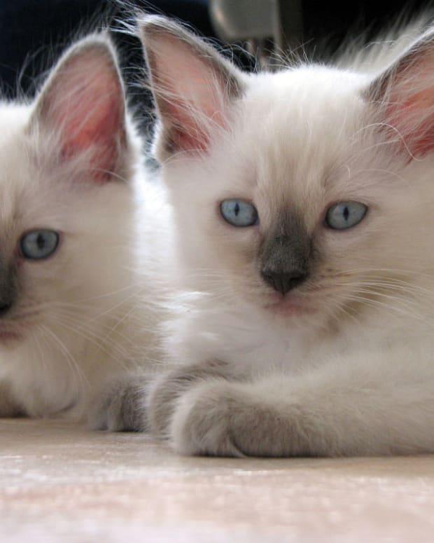 cat-health-questions