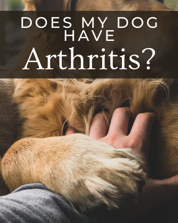 what-will-help-senior-dogs-with-joint-pain