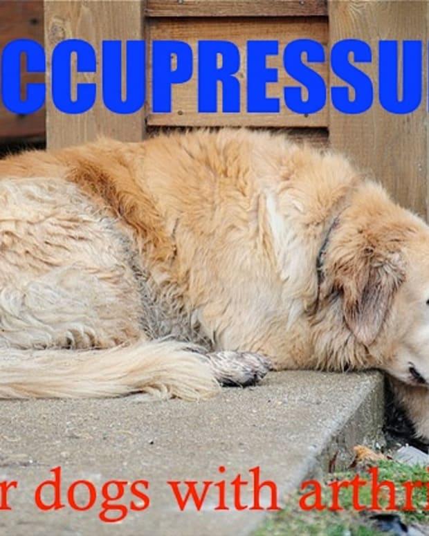 natural-dog-health-acupressure