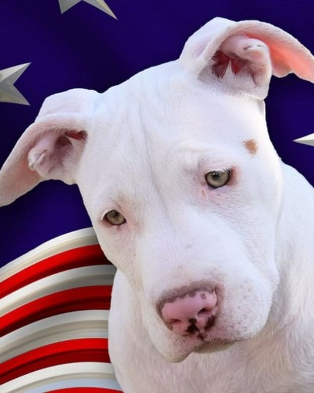 five-best-dog-breeds-from-america
