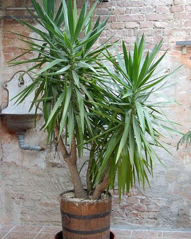 choosing-your-indoor-plants