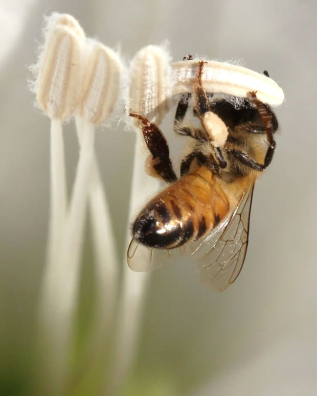 are-bees-disappearing-what-will-happen-if-bees-become-extinct