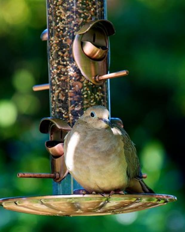 how-do-i-make-my-bird-food-last-longer