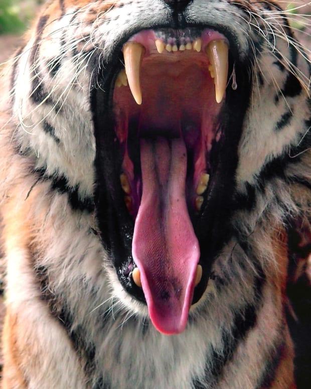 what-causes-a-yawn-things-that-make-me-yawn