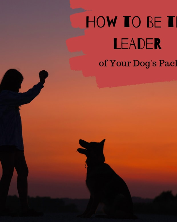 leader-of-the-pack-how-to-make-your-dog-feel-secure-and-happy
