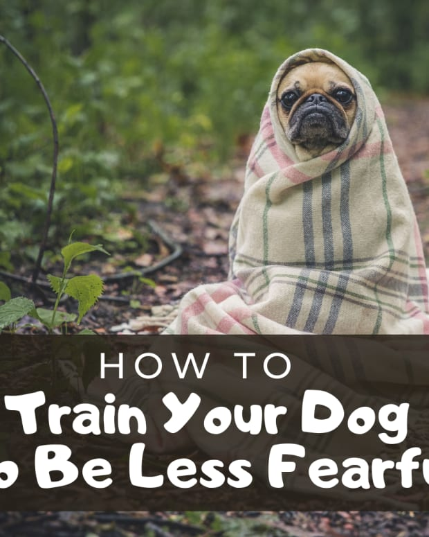 dog-behavior-can-you-reinforce-fear
