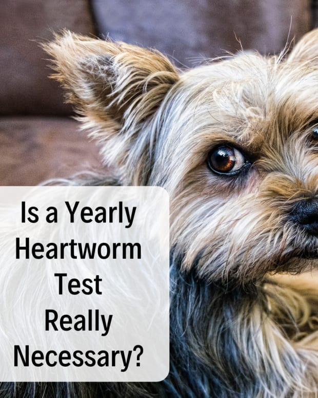 is-heartworm-testing-really-necessary