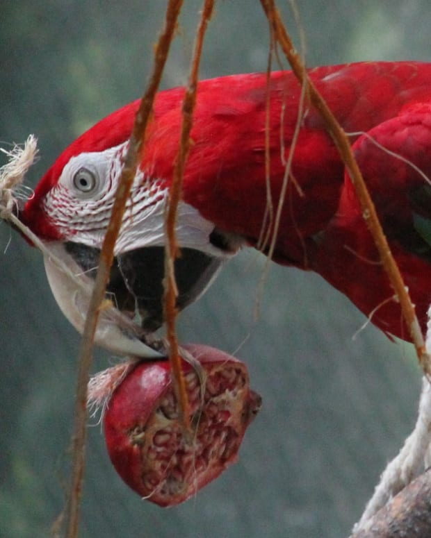 adding-fruits-and-vegetables-to-your-pet-birds-diet