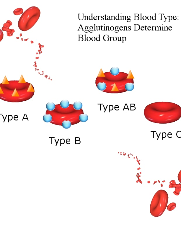 blood-types-history-genetics-and-percentages-around-the-world