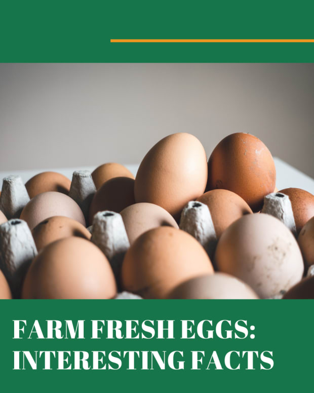 bloom-on-fresh-eggs-interesting-facts