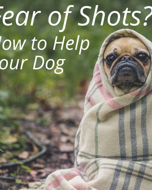 how-to-make-your-dog-less-fearful-of-shots