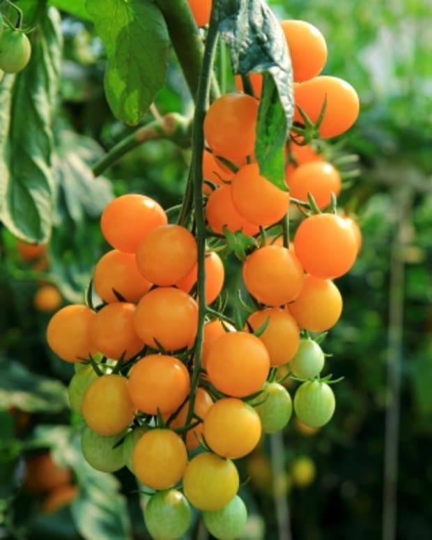 saving-money-calculating-payback-on-an-organic-garden