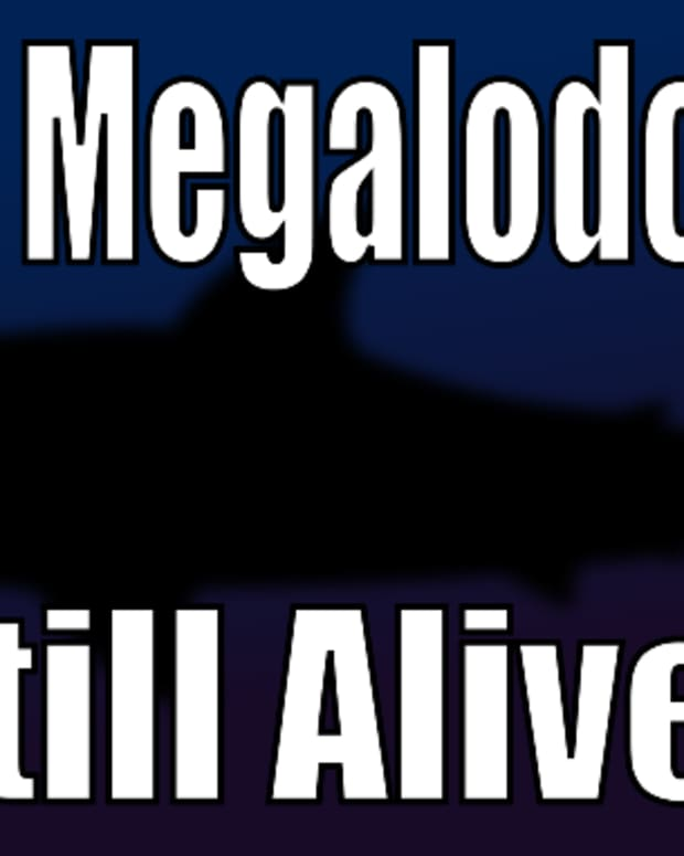 is-the-megalodon-shark-still-alive