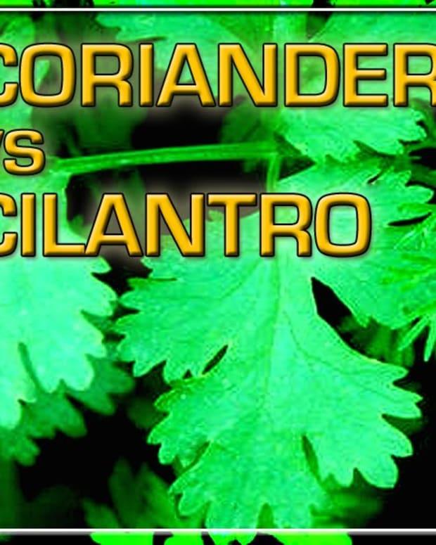 coriander-vs-cilantro