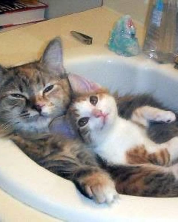 10-reasons-why-cats-are-awesome