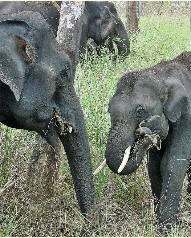 childrens-informaion-on-endangered-animals
