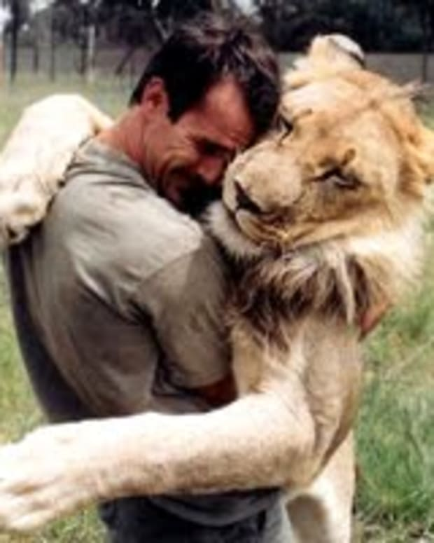 are-lions-endangered-and-who-is-caring-for-lions
