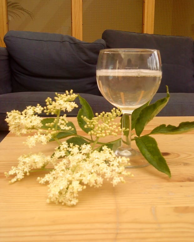how-to-make-elderflower-champagne