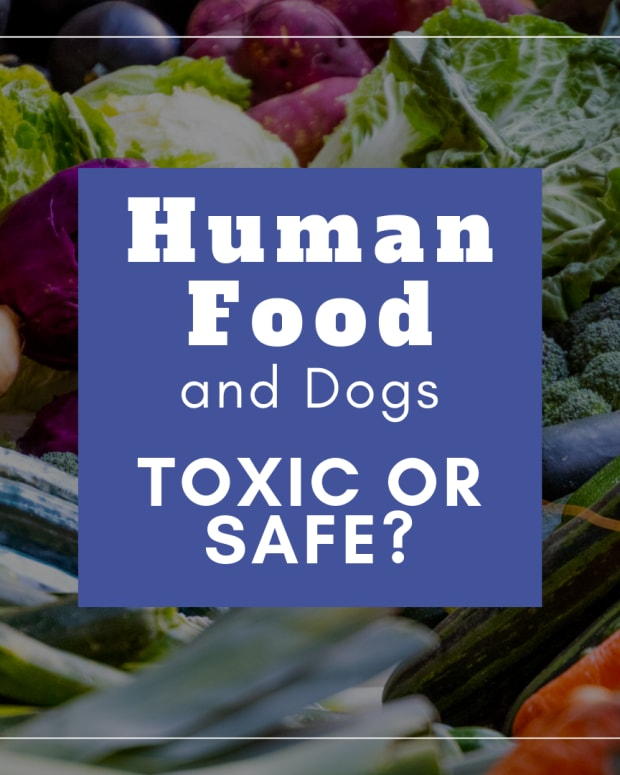 the-truth-about-toxic-substances-for-dogs
