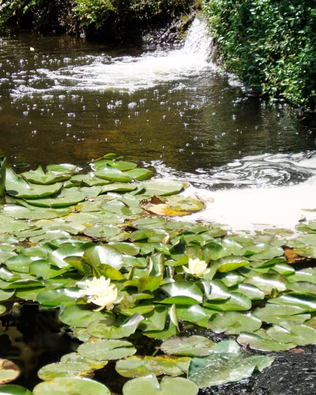 water-health-hazards