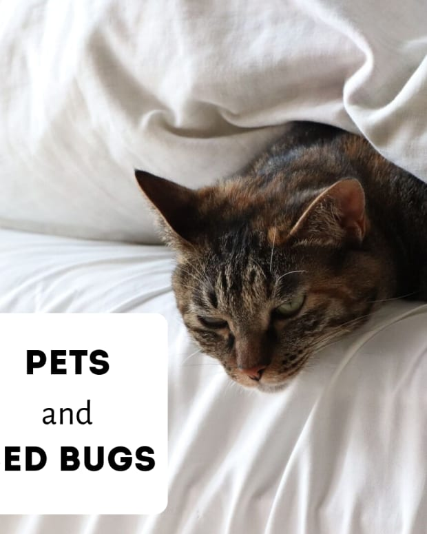 bedbugs-and-cats