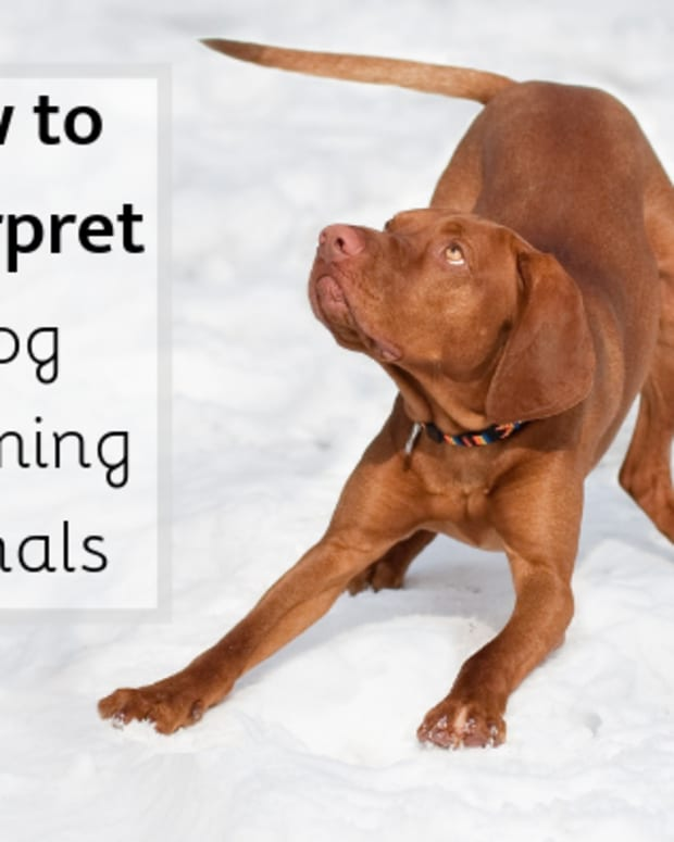dog-behavior-understanding-dog-calming-signals