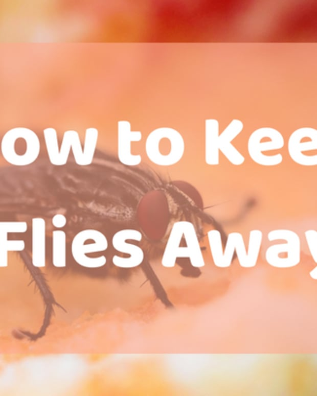keeping_flies_from_entering