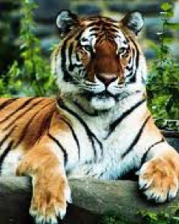 adrienne-richs-aunt-jennifers-tigers
