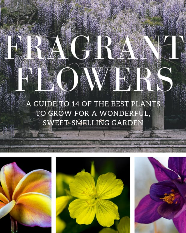those-fragrant-flowers