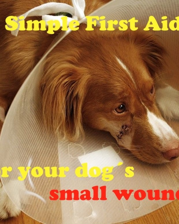 how-to-clean-a-wound-on-your-dog