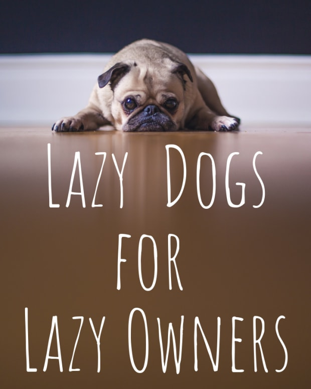 top-five-dog-choices-for-slackers