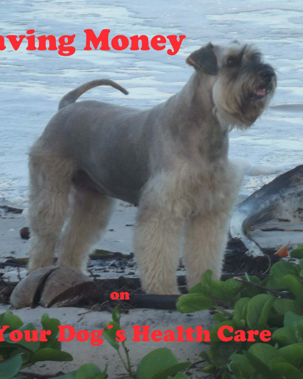 how-to-save-money-on-your-dogs-healthcare