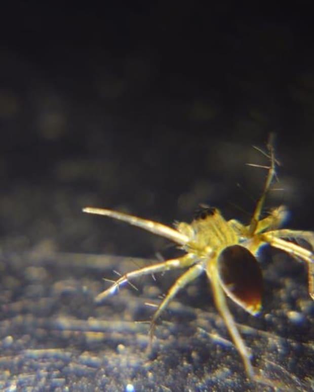 triumph-over-arachnophobia