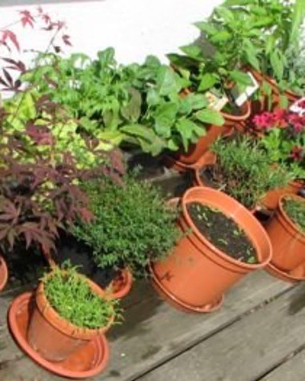 plan-a-balcony-garden