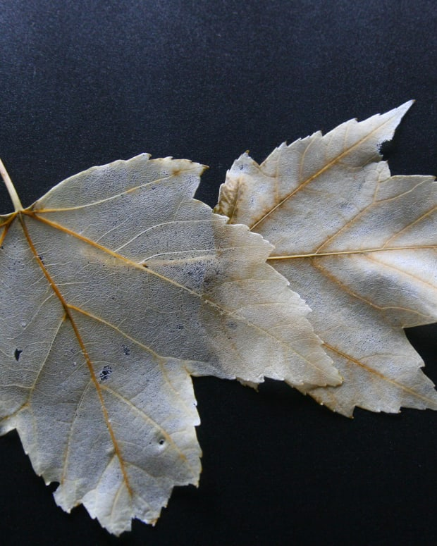 how-to-make-skeleton-leaves