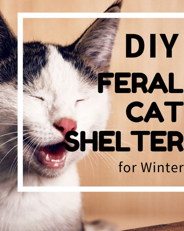 inexpensive-tips-for-helping-a-feral-cat-survive-the-winter-months