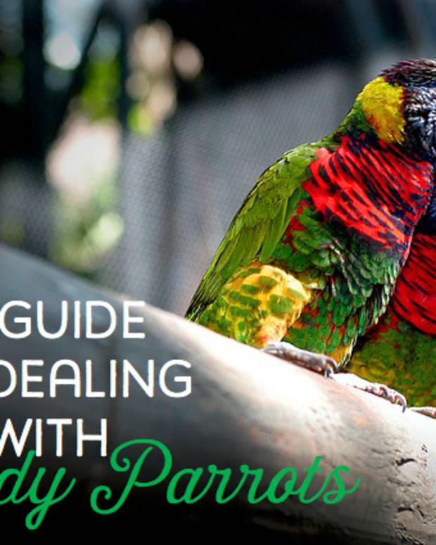 listening-to-your-lovebird