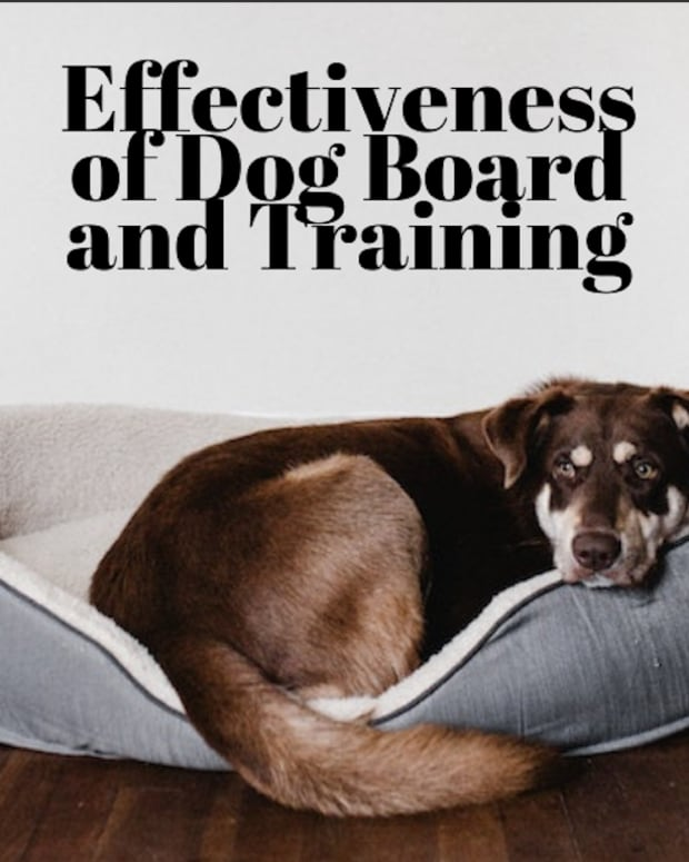 board-and-training-programs-for-dogs-do-they-work