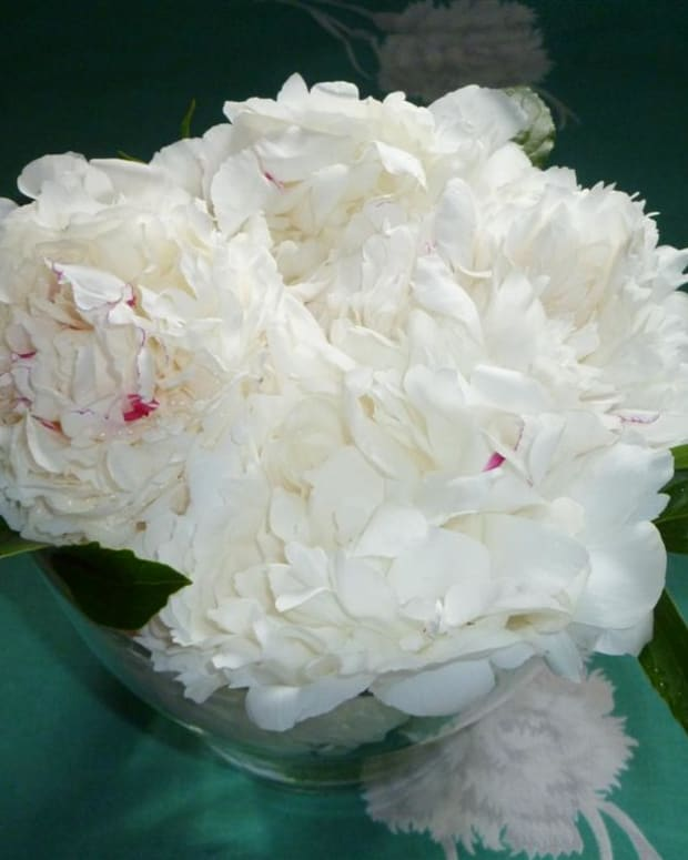 how-to-arrange-peonies