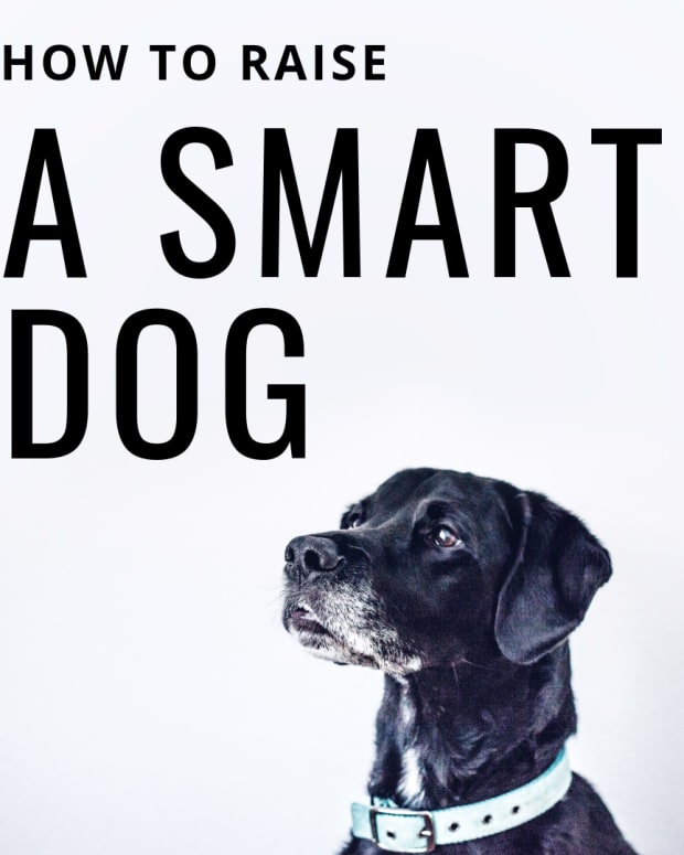 is-my-dog-smarter-than-other-dogs