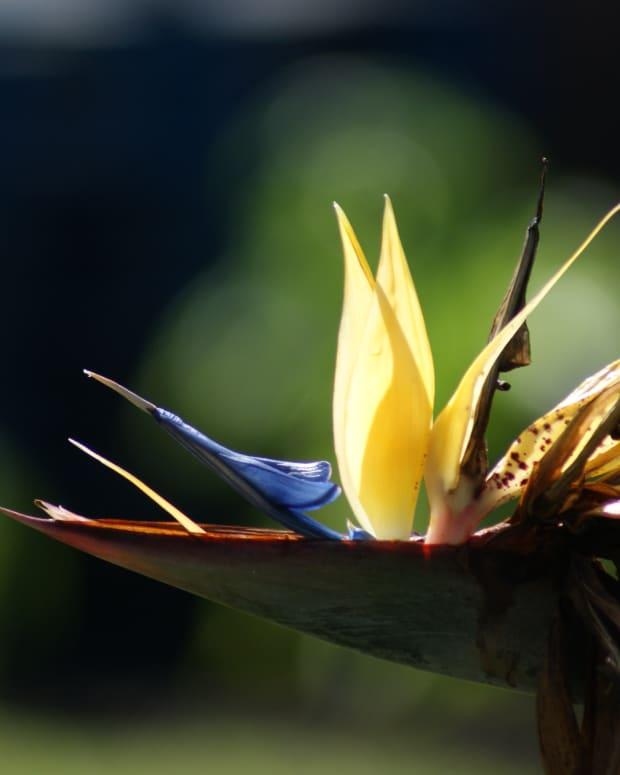 mandela-gold