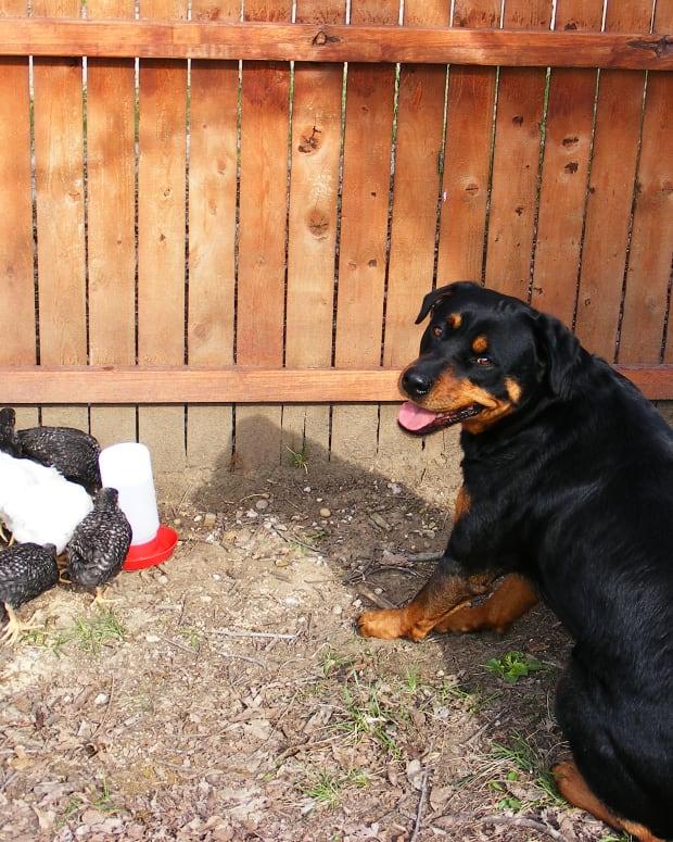 dog-behavior-modification-open-bar-and-closed-bar-method