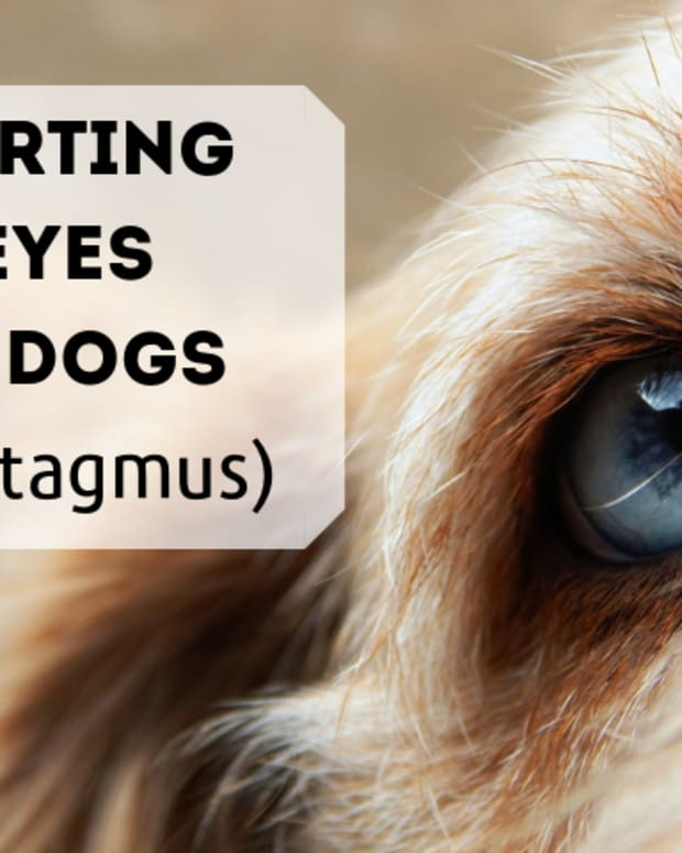 dog-health-why-are-dogs-eyes-darting-back-and-forth