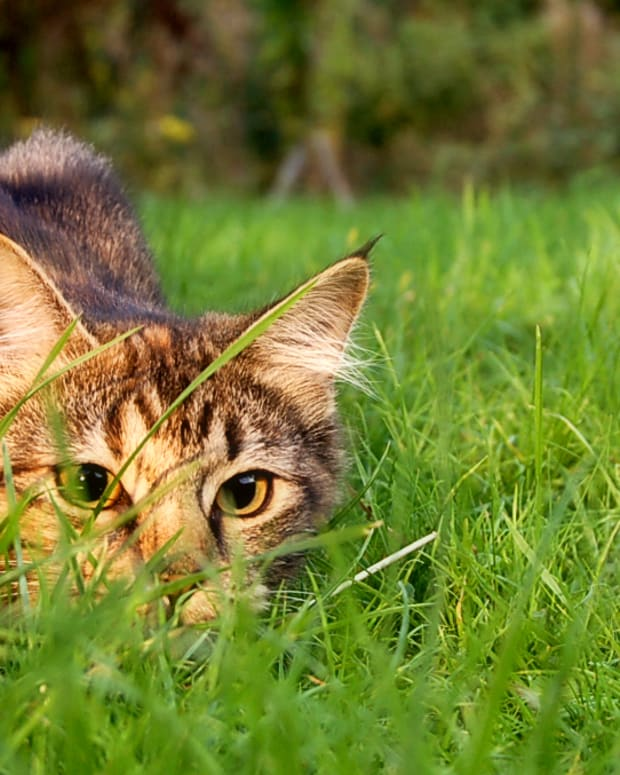 health-insurance-for-cats