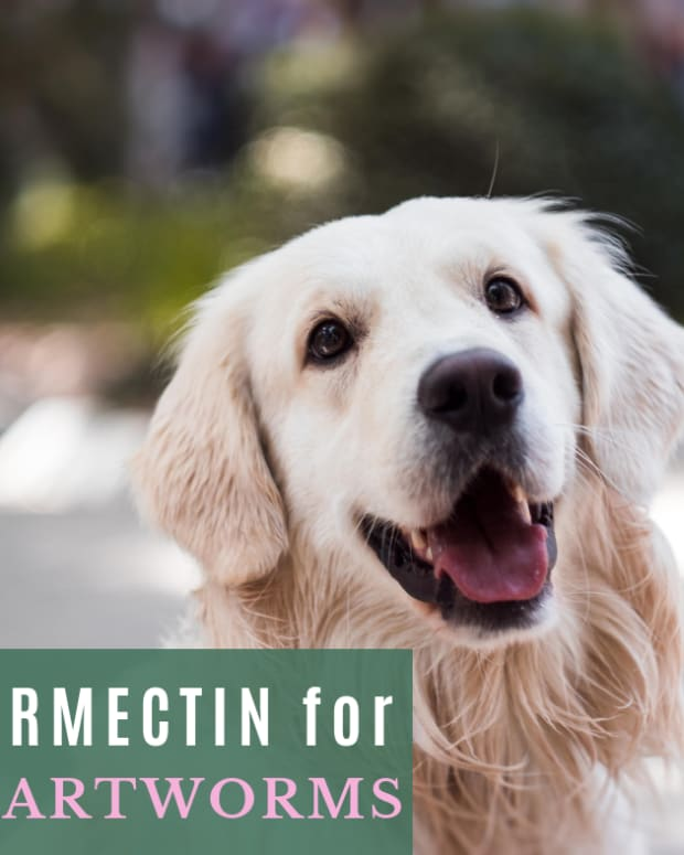 safe-heartworm-treatment-for-your-dog