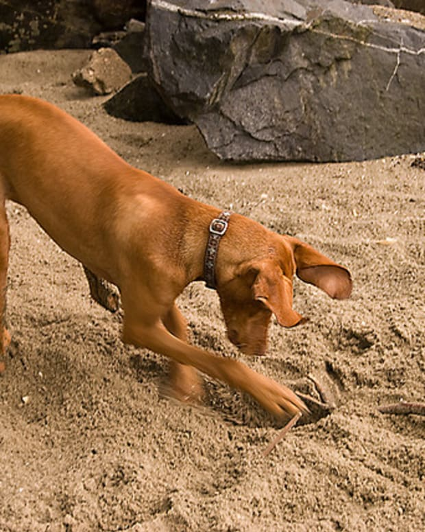 dog-training-tips-digging