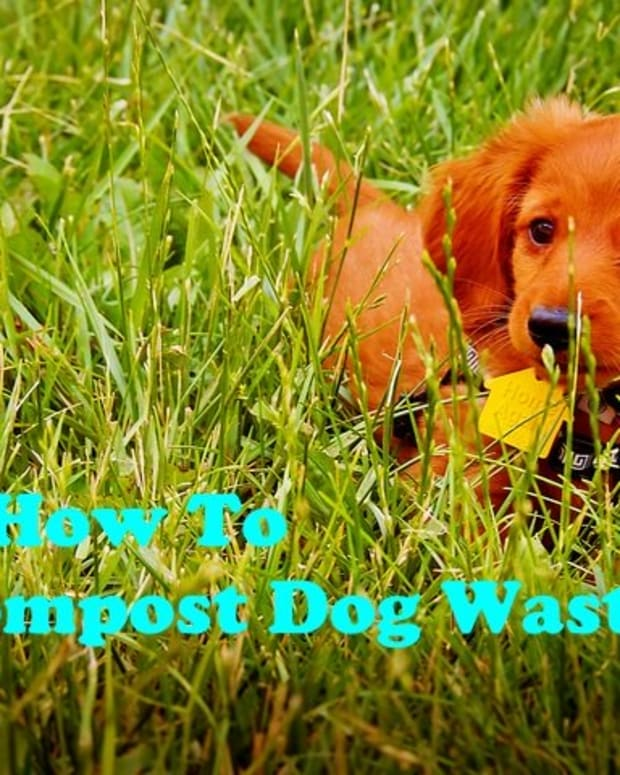 composting-dog-waste