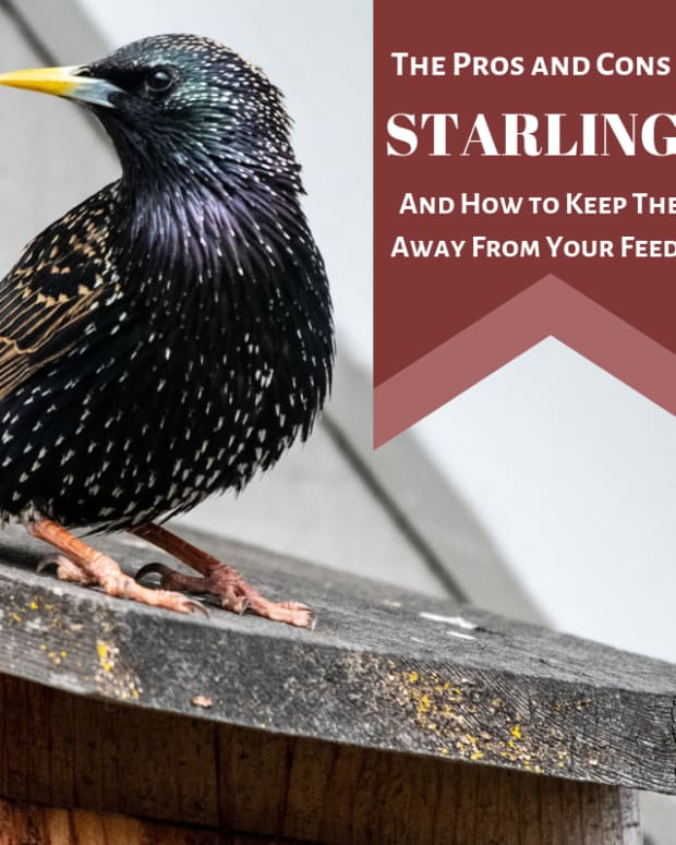 amazing-starlings-the-good-the-bad-the-bold-and-the-beautiful